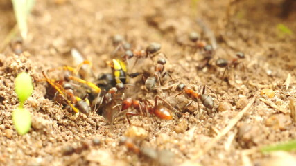 Ants having something to eat