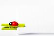 memo with ladybug clip