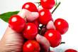 hand holding tomato