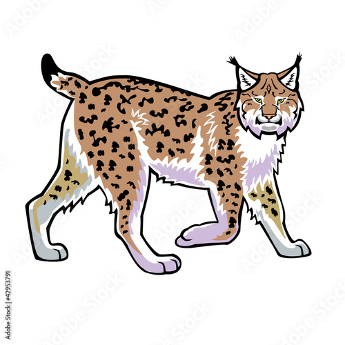 lynx vector isolated on white