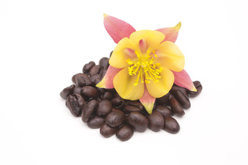 Tropical flower on coffee beans