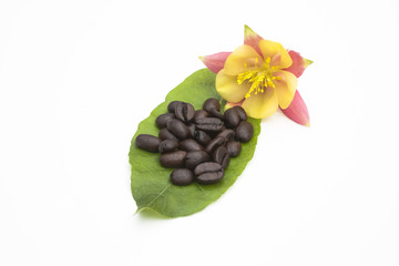 Coffee beans on a leaf with yellow and pink flower