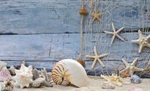 Location Rappel: nautilus, étoiles de mer et épaves
