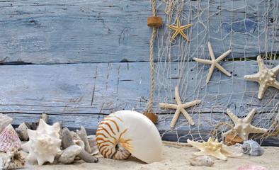 Urlaubserinnerung: Nautilus, Seesterne und Strandgut