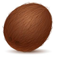 Realistic coconut