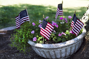 Patriotic Flowers in Planter