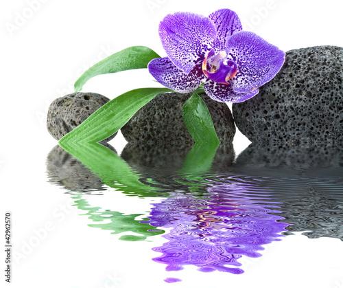 orchidée pourpre sur galets noirs