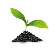 Plante avec amas de terre