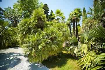 Palm-trees alley in tropical garden