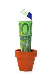 euro in blumentopf
