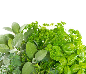 variety fresh herbs over white background