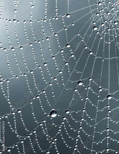 Monochrome rain drops on spider's web