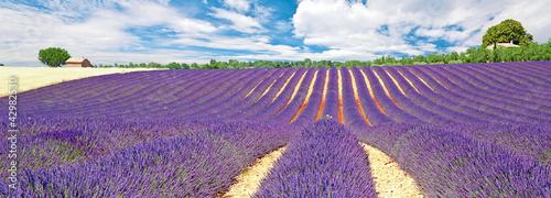 Fototapeten,provence,lavendel,lavendel,feld