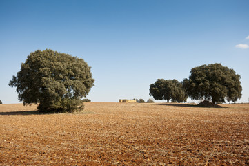 Dehesa in an agricultural landscape, Madrid, Spain