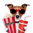 dog watching a movie