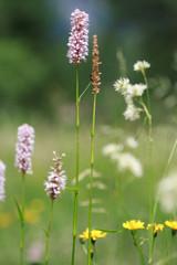 fioritura in val di Mello