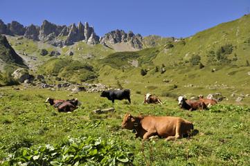 vacas alpes