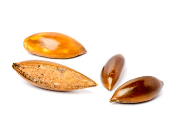 Sapote or Mamey Seeds