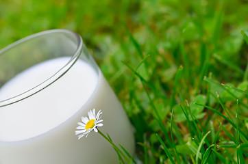 verre de lait,nature,bien-être,santé,herbe