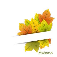 Autum card - place your text - Sfondo Autunnale