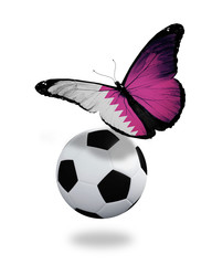Concept - butterfly with Qatari flag flying near the ball, like