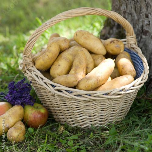 Erntezeit, Kartoffeln