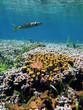 Coral garden and barracuda