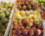 many seasonal apples on display