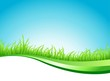 vector illustration of grass and line art