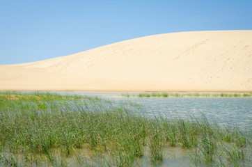 Sand dune in Jockey's Ridge State Park in North Carolina