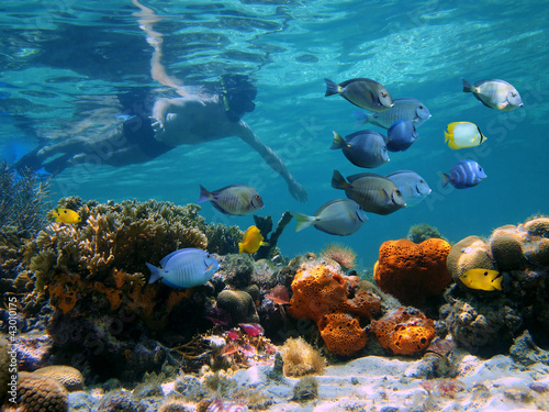 Man underwater snorkeling on a colorful coral reef with school of tropical fish, Caribbean sea - 43010175
