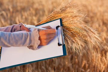 Empty paperwork, pen and ears wheat in women's hands
