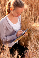 Young woman agronomist or a student analyzing wheat ears