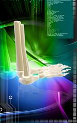Leg bone