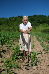Senior rural woman in the corn field