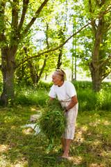 Senior woman piling up mowed grass