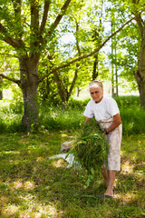 Senior woman piling up mowed grass