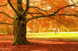 canvas print picture - Herbstbaum