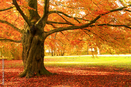 canvas print picture Herbstbaum