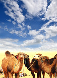 Fototapete Afrikakarte - Agressivität - Sandwüste