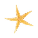 Seastar, izolated on white background
