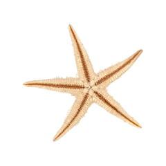 Underside of a seastar, izolated on white background