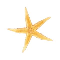 Seastar, izolated on white background
