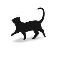 Form contour cat