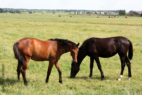 Horses grazing in the grassland