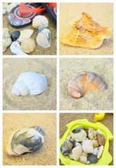 """montage"""" coquillage et crustacés sur le sable"""""""