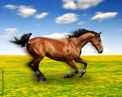 the running horse in the meadow