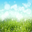 Abstract nature background with grass and sky bokeh lights