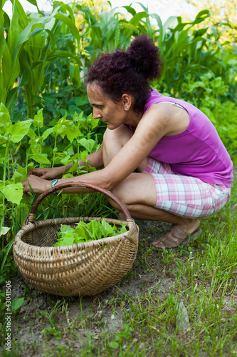 Young woman farmer picking cress