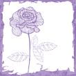 purple rose background